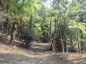 山散歩自然